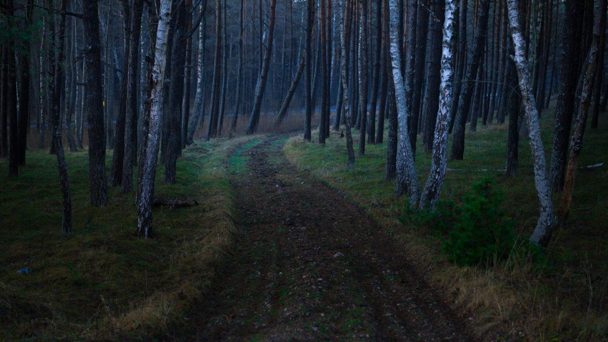 Soudain dans la forêt